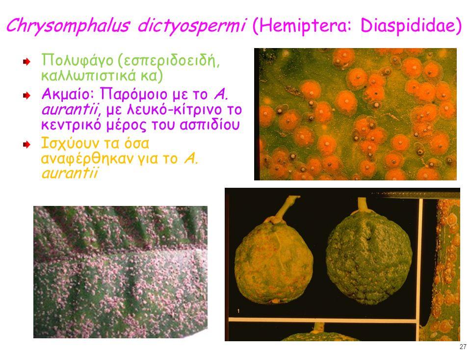 Chrysomphalus dictyospermi (Hemiptera: Diaspididae) Πολυφάγο (εσπεριδοειδή, καλλωπιστικά κα) Ακμαίο: Παρόμοιο με το A.