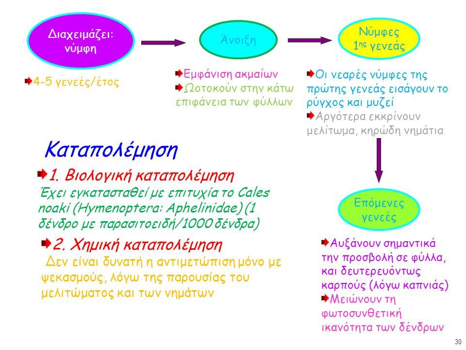 Διαχειμάζει: νύμφη Άνοιξη 4-5 γενεές/έτος Εμφάνιση ακμαίων Ωοτοκούν στην κάτω επιφάνεια των φύλλων Νύμφες 1 ης γενεάς Οι νεαρές νύμφες της πρώτης γενεάς εισάγουν το ρύγχος και μυζεί Αργότερα εκκρίνουν μελίτωμα, κηρώδη νημάτια Επόμενες γενεές Αυξάνουν σημαντικά την προσβολή σε φύλλα, και δευτερευόντως καρπούς (λόγω καπνιάς) Μειώνουν τη φωτοσυνθετική ικανότητα των δένδρων Καταπολέμηση 1.