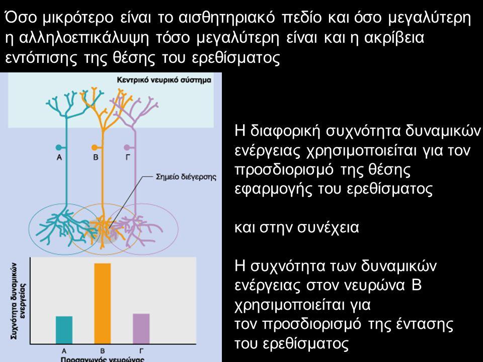 Όσο μικρότερο είναι το αισθητηριακό πεδίο και όσο μεγαλύτερη η αλληλοεπικάλυψη τόσο μεγαλύτερη είναι και η ακρίβεια εντόπισης της θέσης του ερεθίσματο