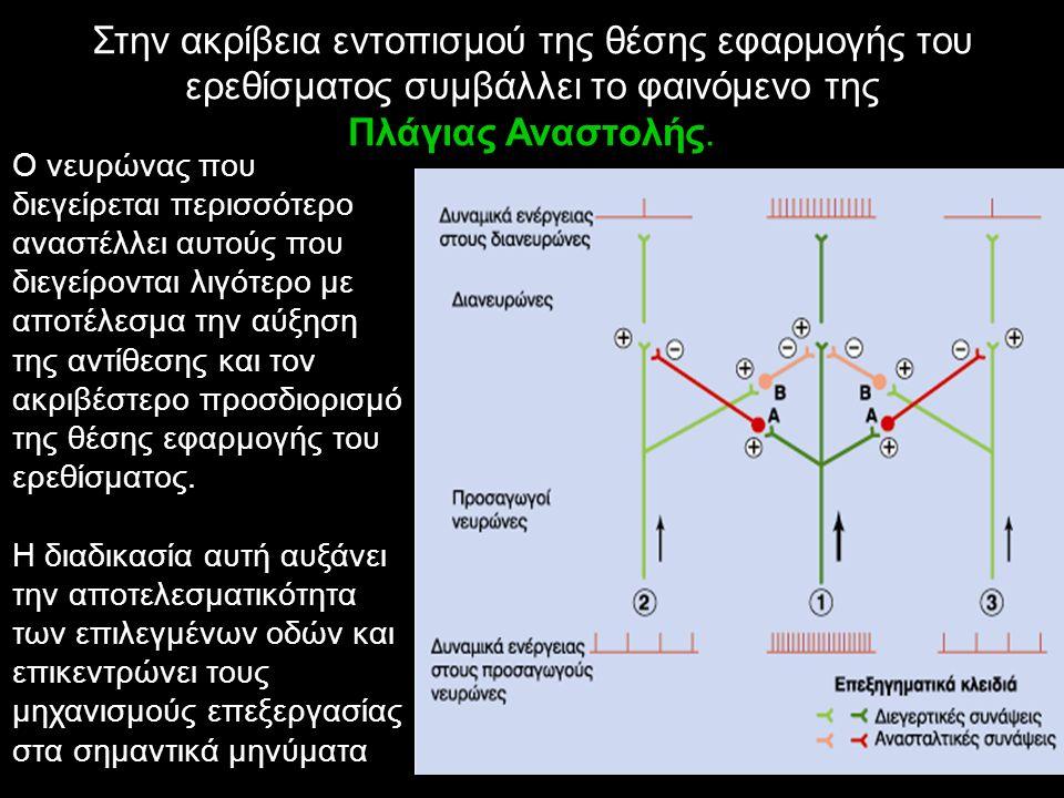 Στην ακρίβεια εντοπισμού της θέσης εφαρμογής του ερεθίσματος συμβάλλει το φαινόμενο της Πλάγιας Αναστολής. Ο νευρώνας που διεγείρεται περισσότερο ανασ