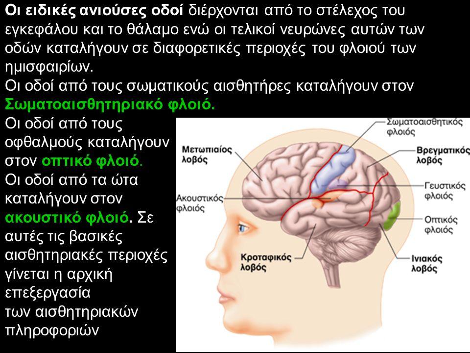 Οι ειδικές ανιούσες οδοί διέρχονται από το στέλεχος του εγκεφάλου και το θάλαμο ενώ οι τελικοί νευρώνες αυτών των οδών καταλήγουν σε διαφορετικές περι