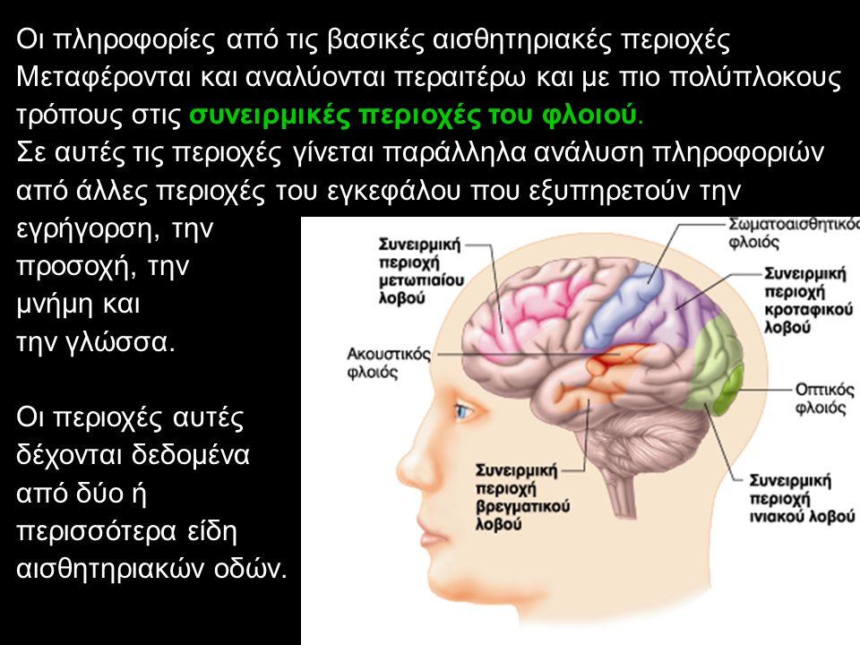Οι πληροφορίες από τις βασικές αισθητηριακές περιοχές Μεταφέρονται και αναλύονται περαιτέρω και με πιο πολύπλοκους τρόπους στις συνειρμικές περιοχές τ