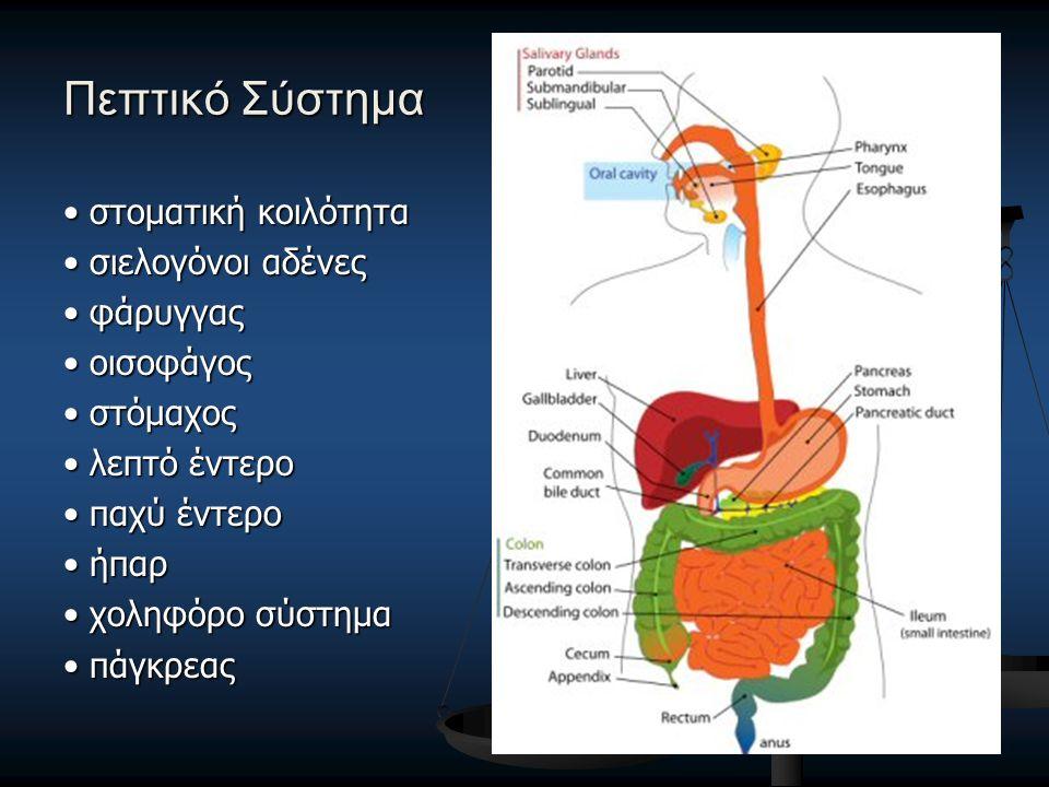 Πεπτικό Σύστημα στοματική κοιλότητα στοματική κοιλότητα σιελογόνοι αδένες σιελογόνοι αδένες φάρυγγας φάρυγγας οισοφάγος οισοφάγος στόμαχος στόμαχος λε
