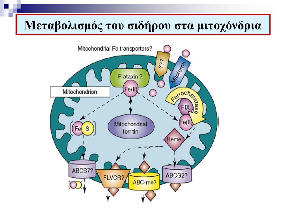 Μεταβολισμός του σιδήρου στα μιτοχόνδρια
