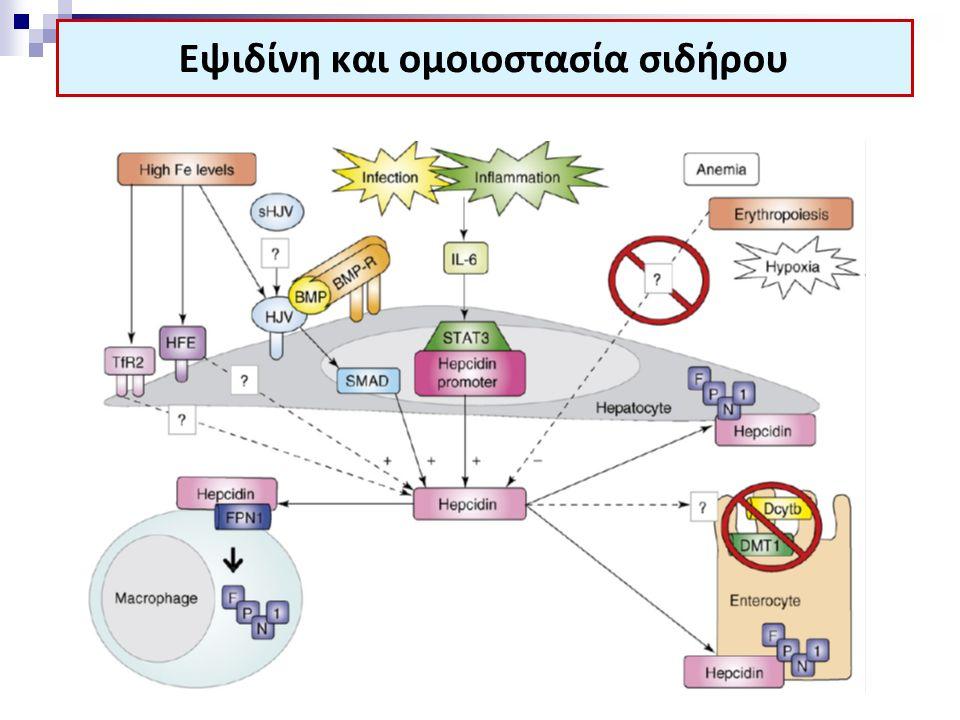 Εψιδίνη και ομοιοστασία σιδήρου