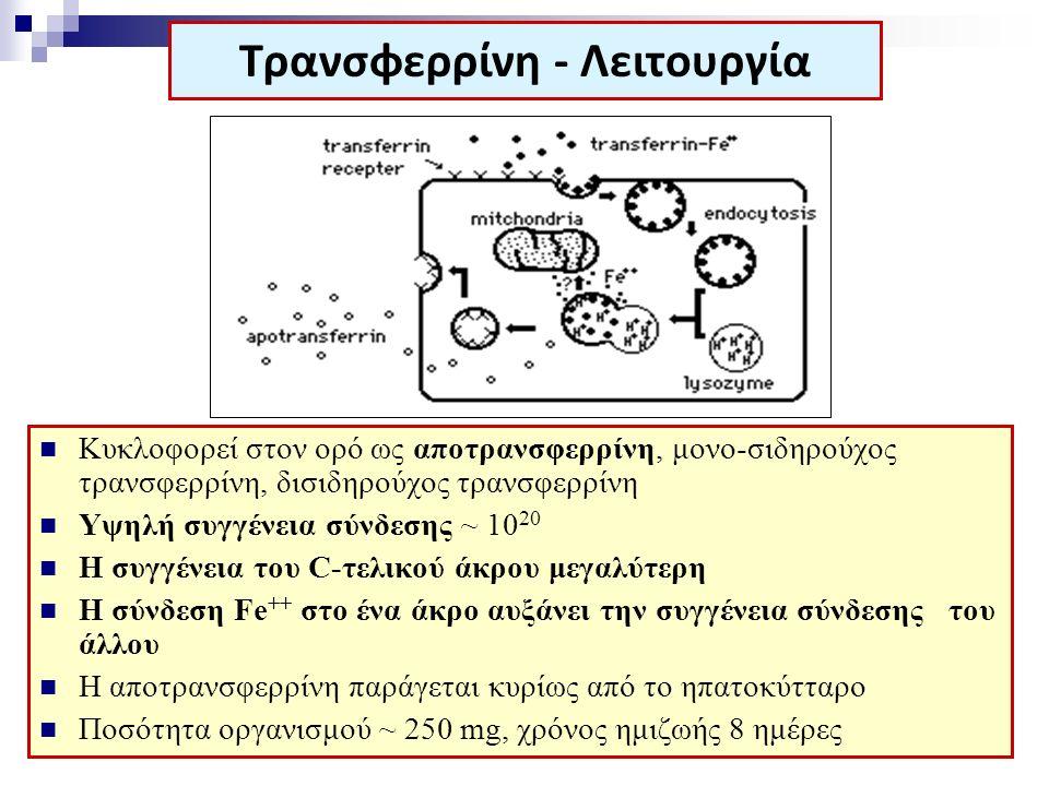 Κυκλοφορεί στον ορό ως αποτρανσφερρίνη, μονο-σιδηρούχος τρανσφερρίνη, δισιδηρούχος τρανσφερρίνη Υψηλή συγγένεια σύνδεσης ~ 10 20 Η συγγένεια του C-τελ