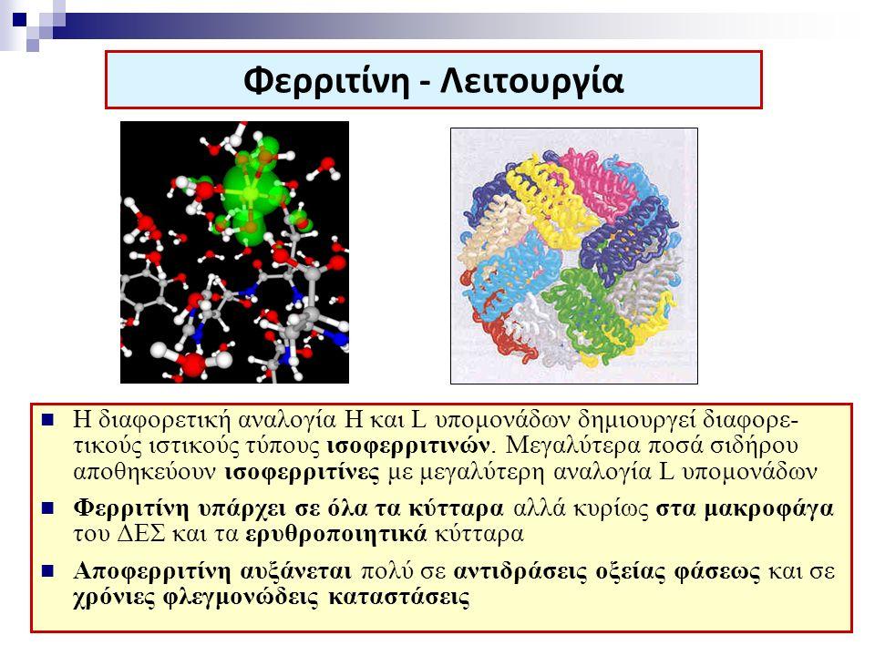 Φερριτίνη - Λειτουργία Η διαφορετική αναλογία H και L υπομονάδων δημιουργεί διαφορε- τικούς ιστικούς τύπους ισοφερριτινών. Μεγαλύτερα ποσά σιδήρου απο