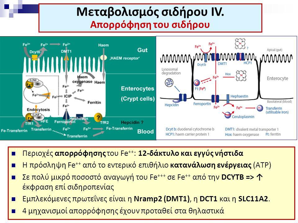 Περιοχές απορρόφησης του Fe ++ : 12-δάκτυλο και εγγύς νήστιδα Η πρόσληψη Fe ++ από το εντερικό επιθήλιο κατανάλωση ενέργειας (ΑΤP) Σε πολύ μικρό ποσοστό αναγωγή του Fe +++ σε Fe ++ από την DCYTB => ↑ έκφραση επί σιδηροπενίας Εμπλεκόμενες πρωτεΐνες είναι η Nramp2 (DMT1), η DCT1 και η SLC11A2.