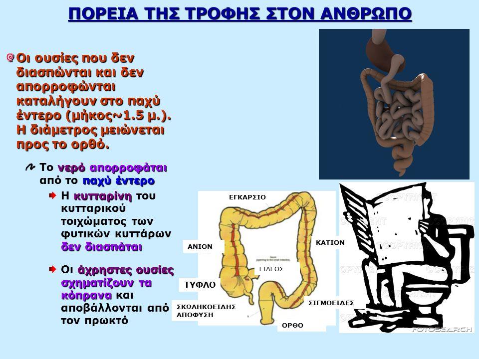 ΗΠΑΡ Το ήπαρ αποτελεί τον μεγαλύτερο αδένα του σώματος και βρίσκεται στο πάνω τμήμα της κοιλιακής κοιλότητας, κάτω από το διάφραγμα, καταλαμβάνοντας το δεξιό υποχόνδριο.