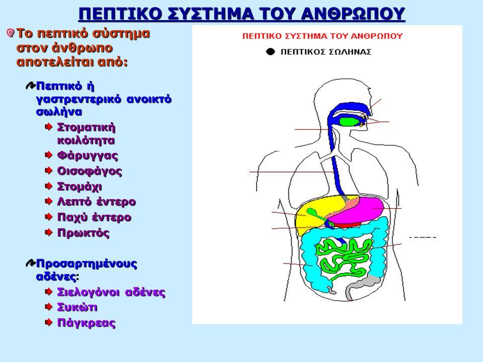 ΠΕΠΤΙΚΟ ΣΥΣΤΗΜΑ ΤΟΥ ΑΝΘΡΩΠΟΥ Το πεπτικό σύστημα στον άνθρωπο αποτελείται από: Πεπτικό ή γαστρεντερικό ανοικτό σωλήνα Στοματική κοιλότητα ΦάρυγγαςΟισοφάγοςΣτομάχι Λεπτό έντερο Παχύ έντερο Πρωκτός Προσαρτημένους αδένες Προσαρτημένους αδένες: Σιελογόνοι αδένες ΣυκώτιΠάγκρεας