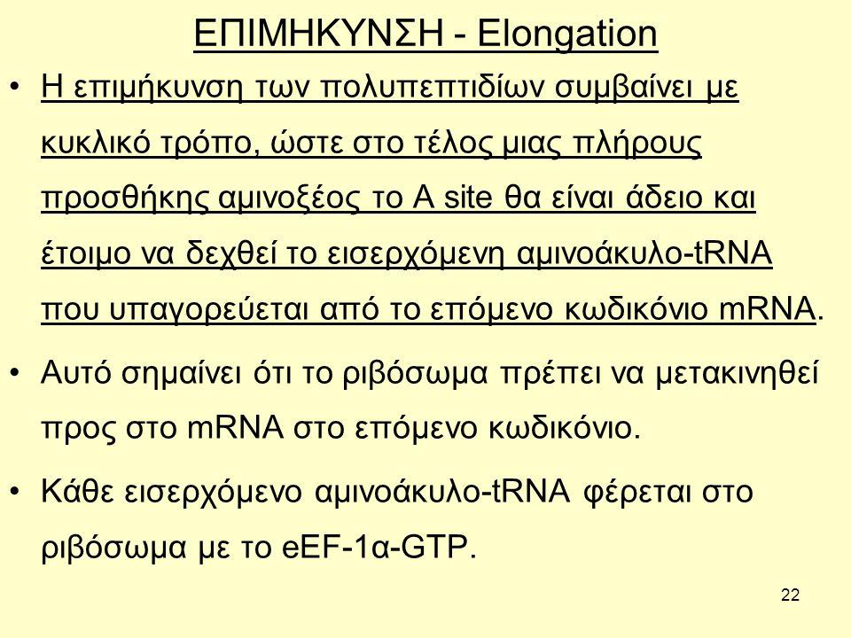 22 ΕΠΙΜΗΚΥΝΣΗ - Elongation H επιμήκυνση των πολυπεπτιδίων συμβαίνει με κυκλικό τρόπο, ώστε στο τέλος μιας πλήρους προσθήκης αμινοξέος το Α site θα είναι άδειο και έτοιμο να δεχθεί το εισερχόμενη αμινοάκυλο-tRNA που υπαγορεύεται από το επόμενο κωδικόνιο mRNA.