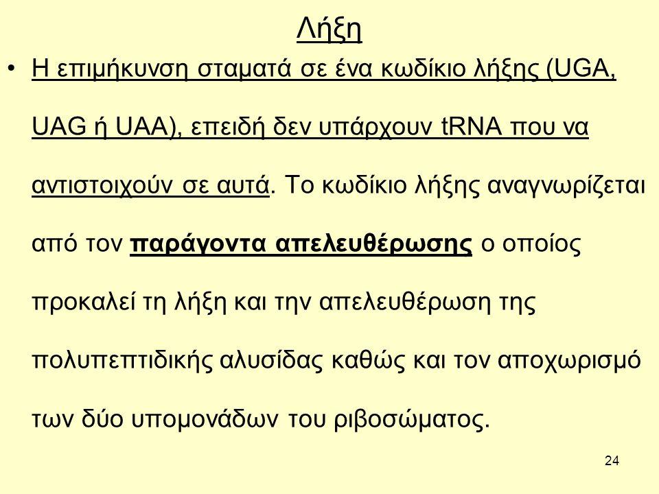24 Λήξη Η επιμήκυνση σταματά σε ένα κωδίκιο λήξης (UGA, UAG ή UAA), επειδή δεν υπάρχουν tRNA που να αντιστοιχούν σε αυτά.