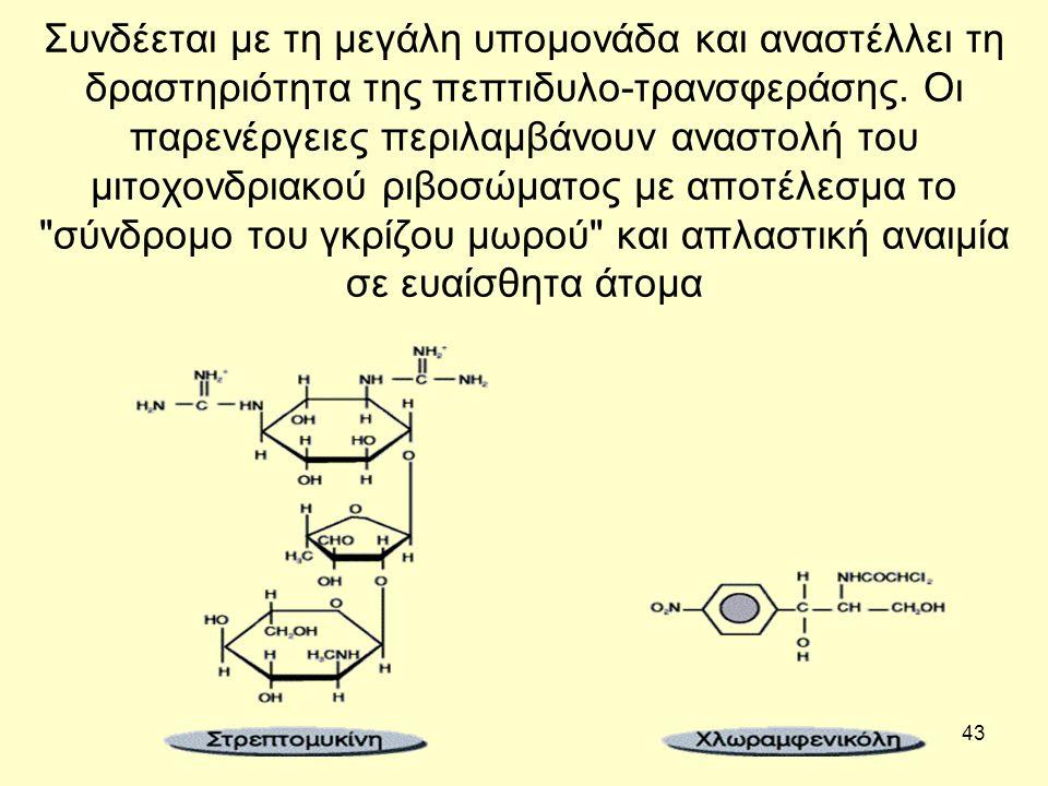 43 Συνδέεται με τη μεγάλη υπομονάδα και αναστέλλει τη δραστηριότητα της πεπτιδυλο-τρανσφεράσης.