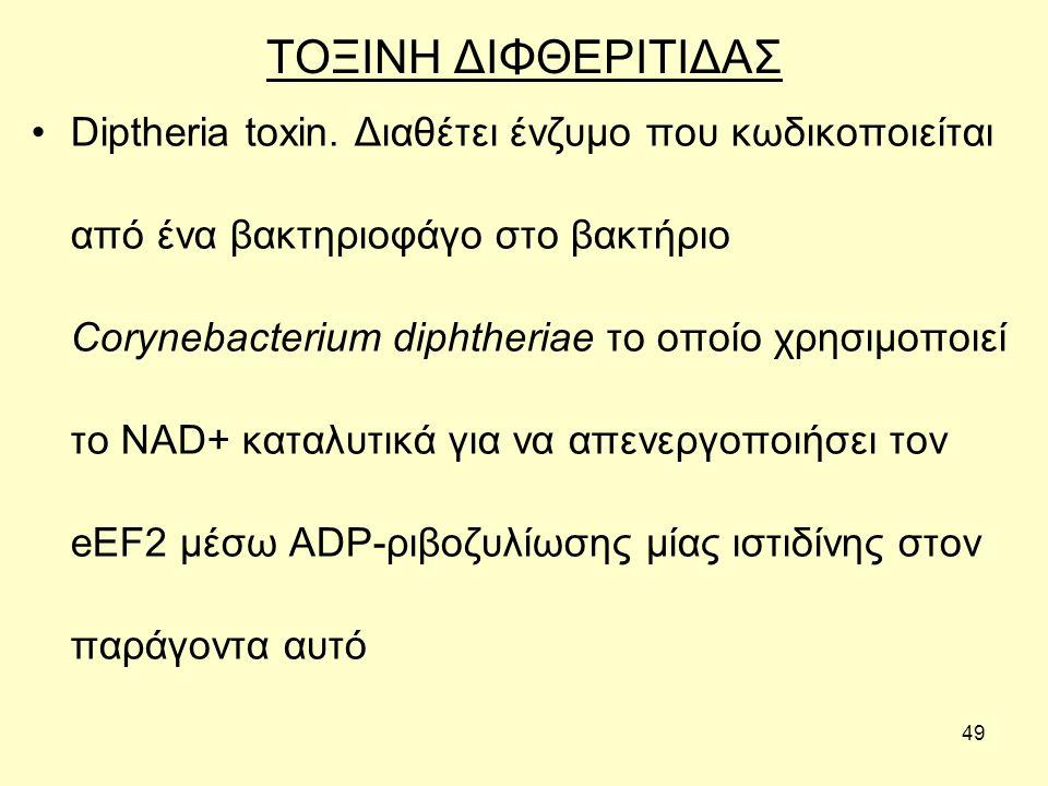 49 ΤΟΞΙΝΗ ΔΙΦΘΕΡΙΤΙΔΑΣ Diptheria toxin.
