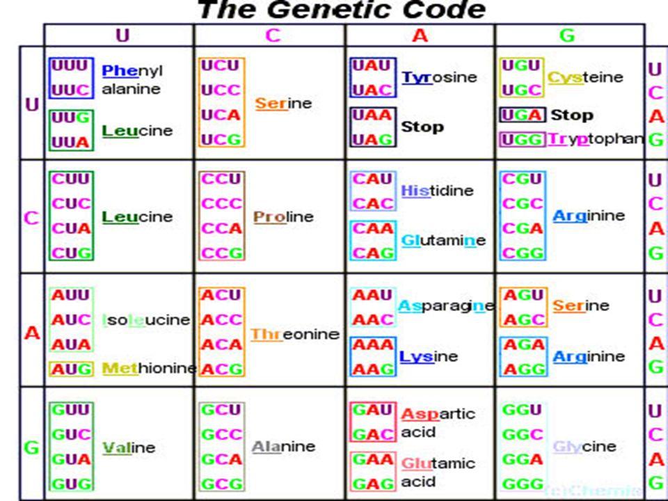 Ποια τα χαρακτηριστικά του γενετικού κώδικα;