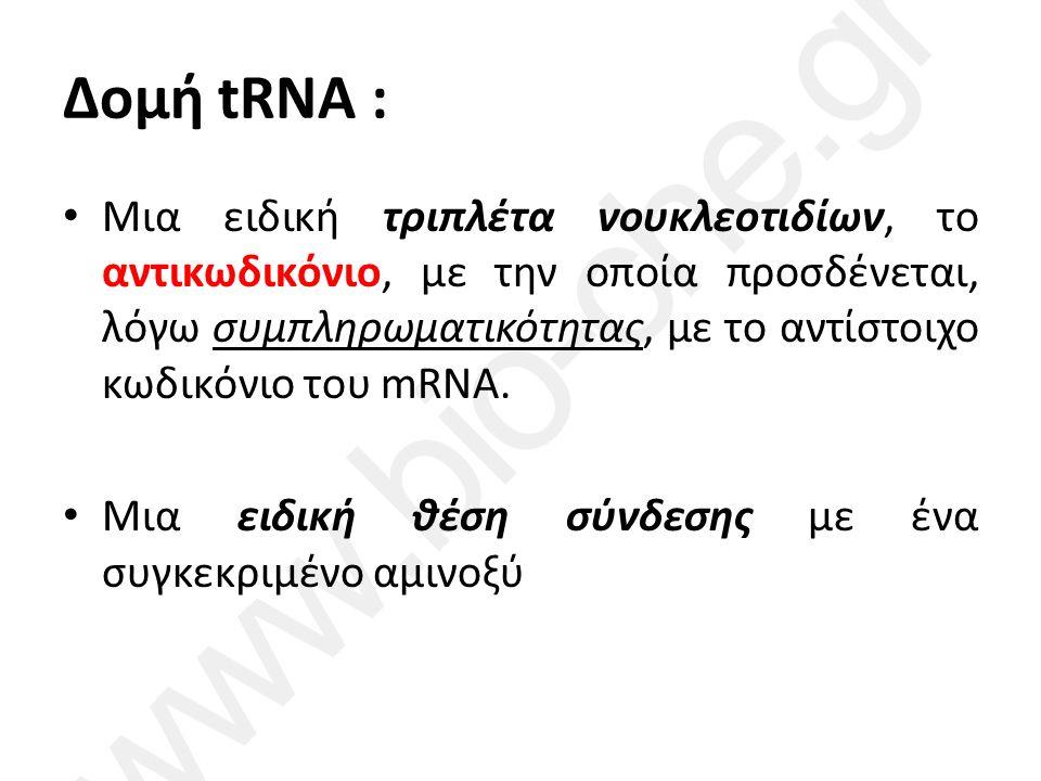 Δομή tRNA : Μια ειδική τριπλέτα νουκλεοτιδίων, το αντικωδικόνιο, με την οποία προσδένεται, λόγω συμπληρωματικότητας, με το αντίστοιχο κωδικόνιο του mRNA.