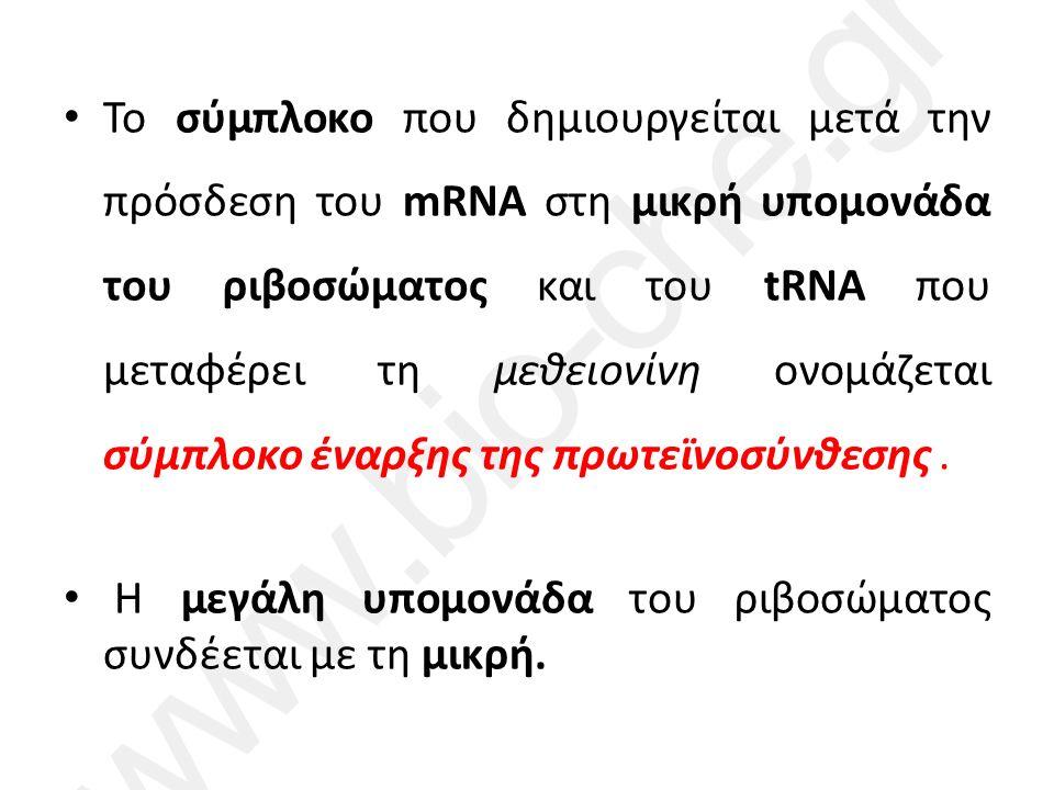 Το σύμπλοκο που δημιουργείται μετά την πρόσδεση του mRNA στη μικρή υπομονάδα του ριβοσώματος και του tRNA που μεταφέρει τη μεθειονίνη ονομάζεται σύμπλοκο έναρξης της πρωτεϊνοσύνθεσης.
