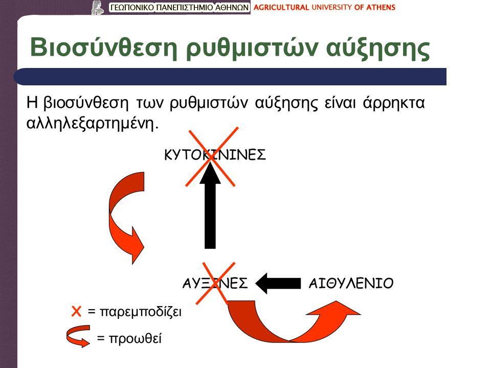 Βιοσύνθεση ρυθμιστών αύξησης Η βιοσύνθεση των ρυθμιστών αύξησης είναι άρρηκτα αλληλεξαρτημένη.