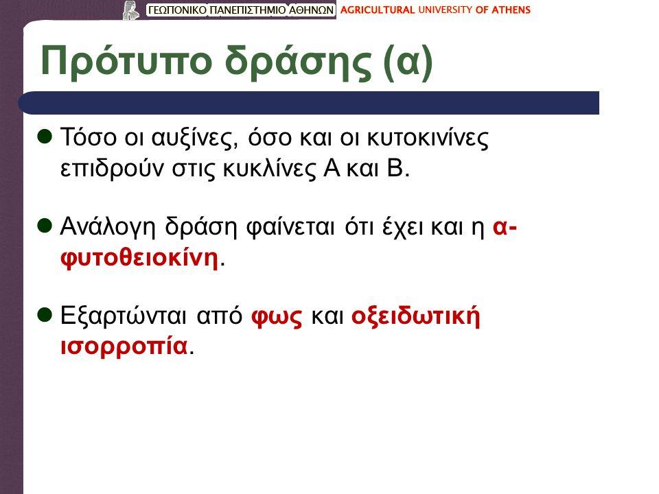 Πρότυπο δράσης (α) Τόσο οι αυξίνες, όσο και οι κυτοκινίνες επιδρούν στις κυκλίνες Α και Β.