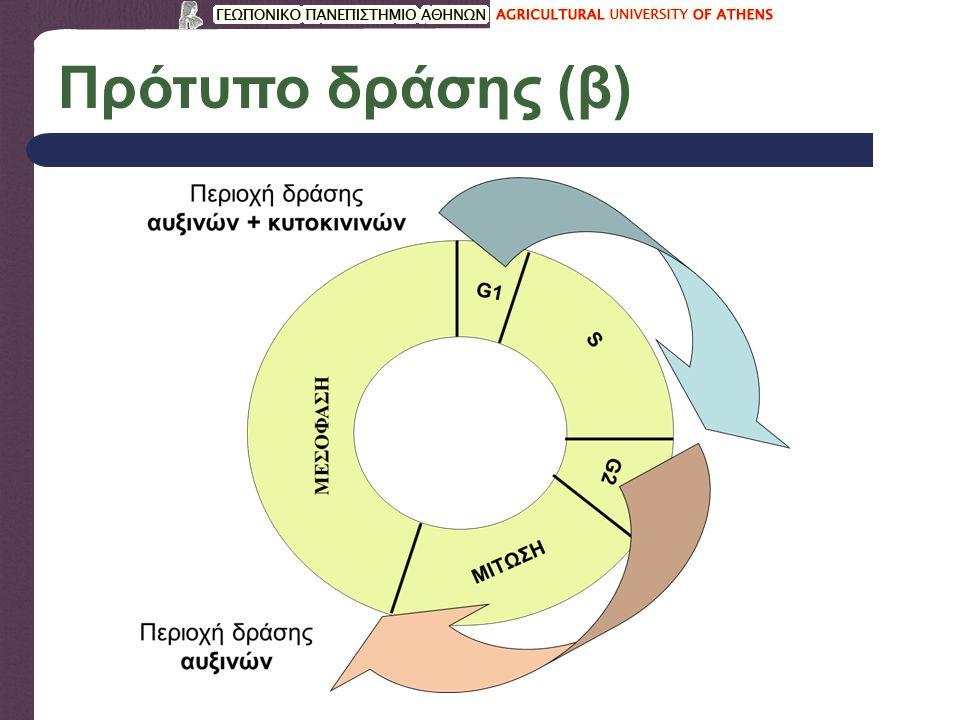 Πρότυπο δράσης (β)