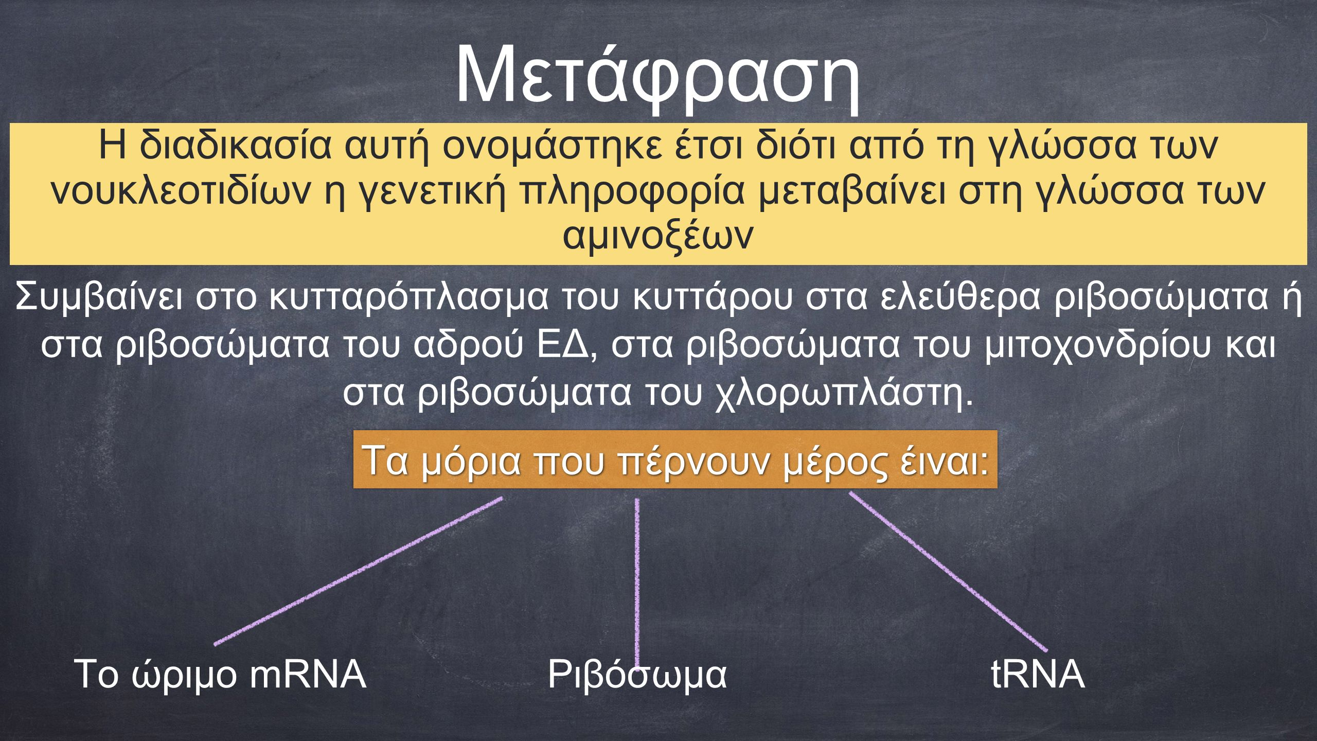 Μετάφραση Η διαδικασία αυτή ονομάστηκε έτσι διότι από τη γλώσσα των νουκλεοτιδίων η γενετική πληροφορία μεταβαίνει στη γλώσσα των αμινοξέων Τα μόρια που πέρνουν μέρος έιναι: tRNAΡιβόσωμαΤο ώριμο mRNA Συμβαίνει στο κυτταρόπλασμα του κυττάρου στα ελεύθερα ριβοσώματα ή στα ριβοσώματα του αδρού ΕΔ, στα ριβοσώματα του μιτοχονδρίου και στα ριβοσώματα του χλορωπλάστη.