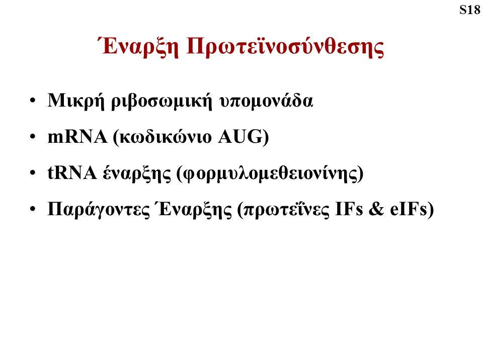 Έναρξη Πρωτεϊνοσύνθεσης Μικρή ριβοσωμική υπομονάδα mRNA (κωδικώνιο AUG) tRNA έναρξης (φορμυλομεθειονίνης) Παράγοντες Έναρξης (πρωτεΐνες IFs & eIFs) S18