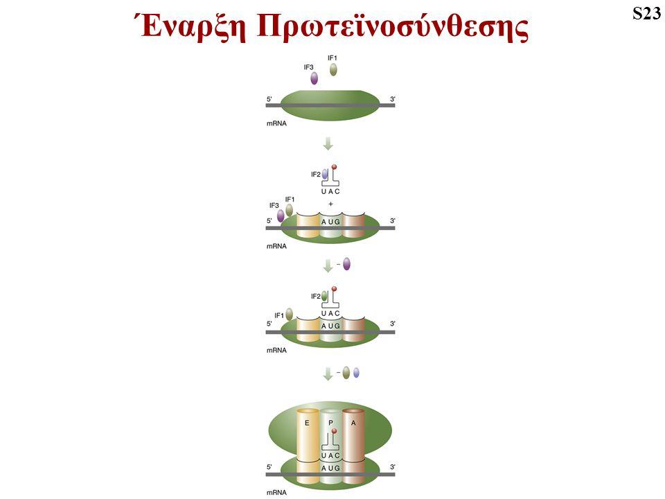 Έναρξη Πρωτεϊνοσύνθεσης S23