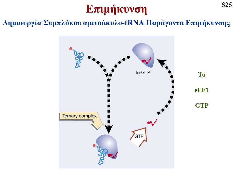 Επιμήκυνση Δημιουργία Συμπλόκου αμινοάκυλο-tRNA Παράγοντα Επιμήκυνσης S25 Tu eEF1 GTP