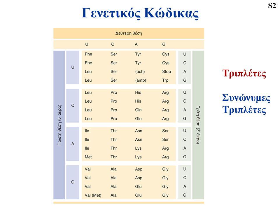 Γενετικός Κώδικας Τριπλέτες Συνώνυμες Τριπλέτες S2