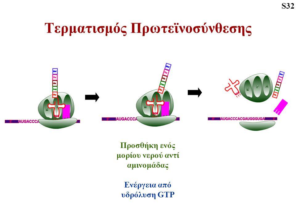 Τερματισμός Πρωτεϊνοσύνθεσης S32 Προσθήκη ενός μορίου νερού αντί αμινομάδας Ενέργεια από υδρόλυση GTP