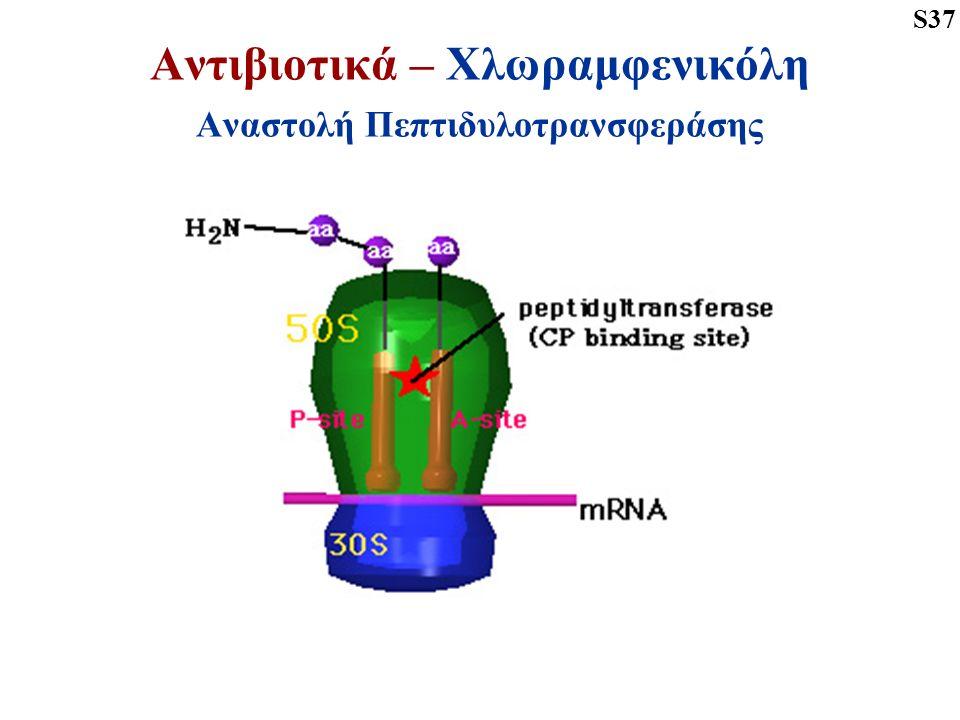 Αντιβιοτικά – Χλωραμφενικόλη Αναστολή Πεπτιδυλοτρανσφεράσης S37