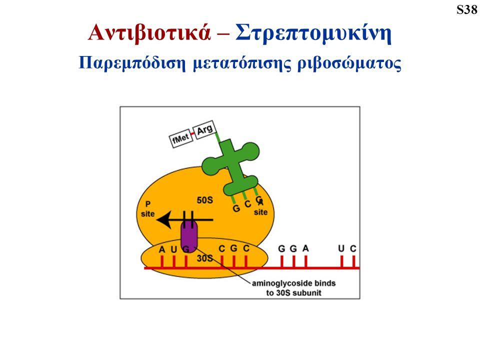 Αντιβιοτικά – Στρεπτομυκίνη Παρεμπόδιση μετατόπισης ριβοσώματος S38