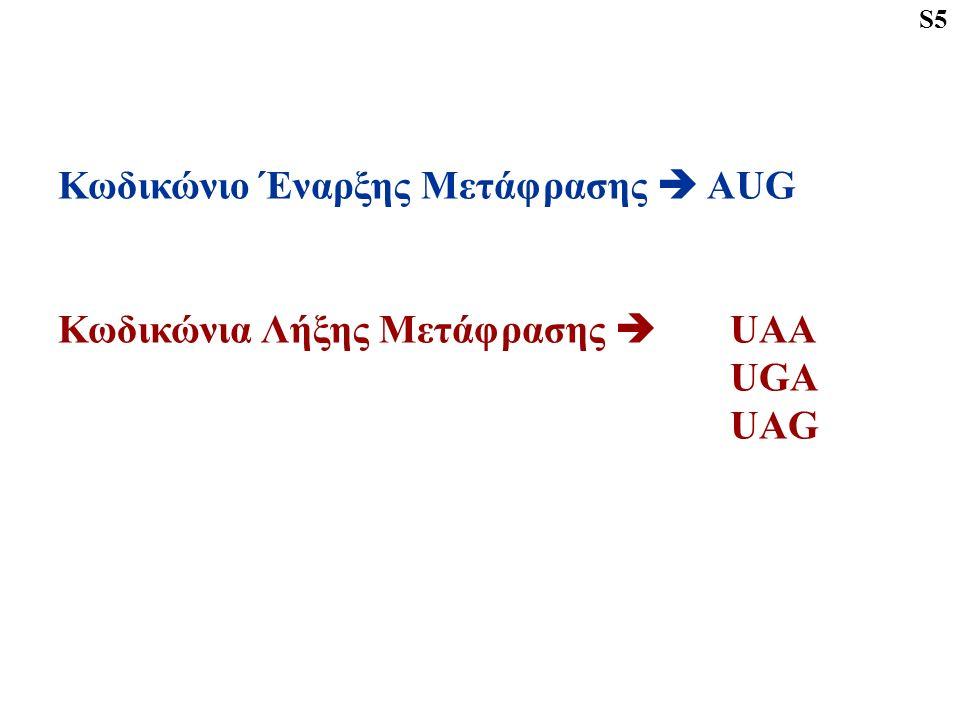 Κωδικώνιο Έναρξης Μετάφρασης  AUG Κωδικώνια Λήξης Μετάφρασης  UAA UGA UAG S5