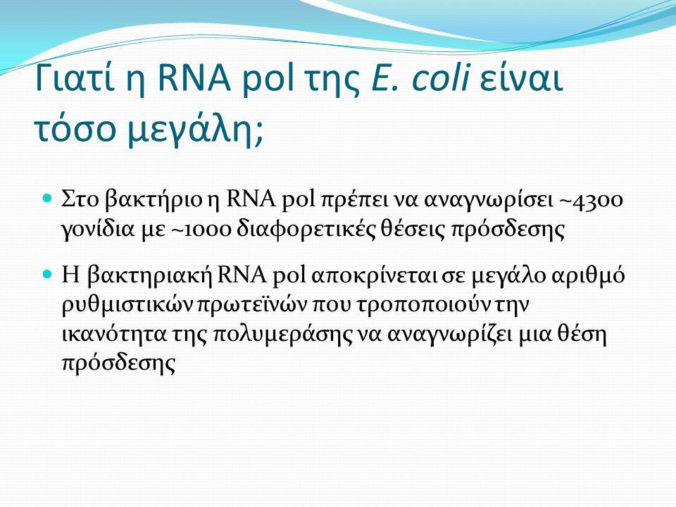 Γιατί η RNA pol της E.