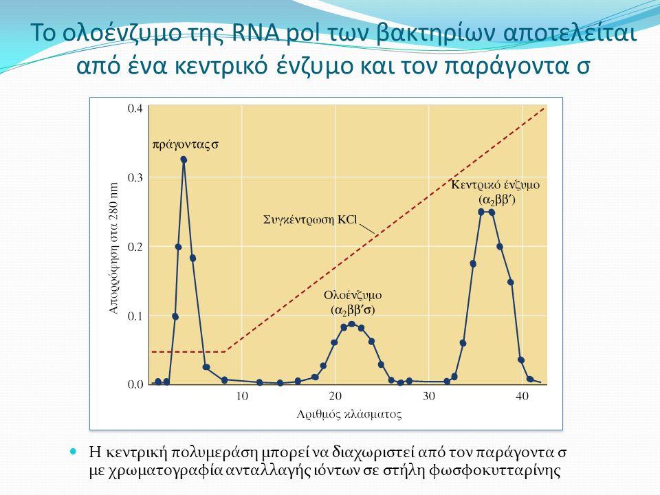 Το ολοένζυμο της RNA pol των βακτηρίων αποτελείται από ένα κεντρικό ένζυμο και τον παράγοντα σ Η κεντρική πολυμεράση μπορεί να διαχωριστεί από τον παράγοντα σ με χρωματογραφία ανταλλαγής ιόντων σε στήλη φωσφοκυτταρίνης