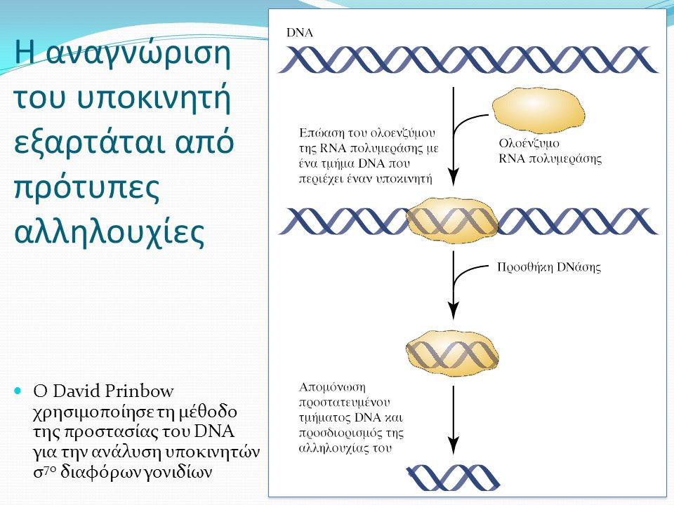 Η αναγνώριση του υποκινητή εξαρτάται από πρότυπες αλληλουχίες Ο David Prinbow χρησιμοποίησε τη μέθοδο της προστασίας του DNA για την ανάλυση υποκινητών σ 70 διαφόρων γονιδίων