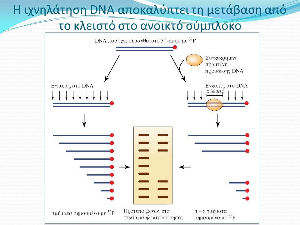 Η ιχνηλάτηση DNA αποκαλύπτει τη μετάβαση από το κλειστό στο ανοικτό σύμπλοκο