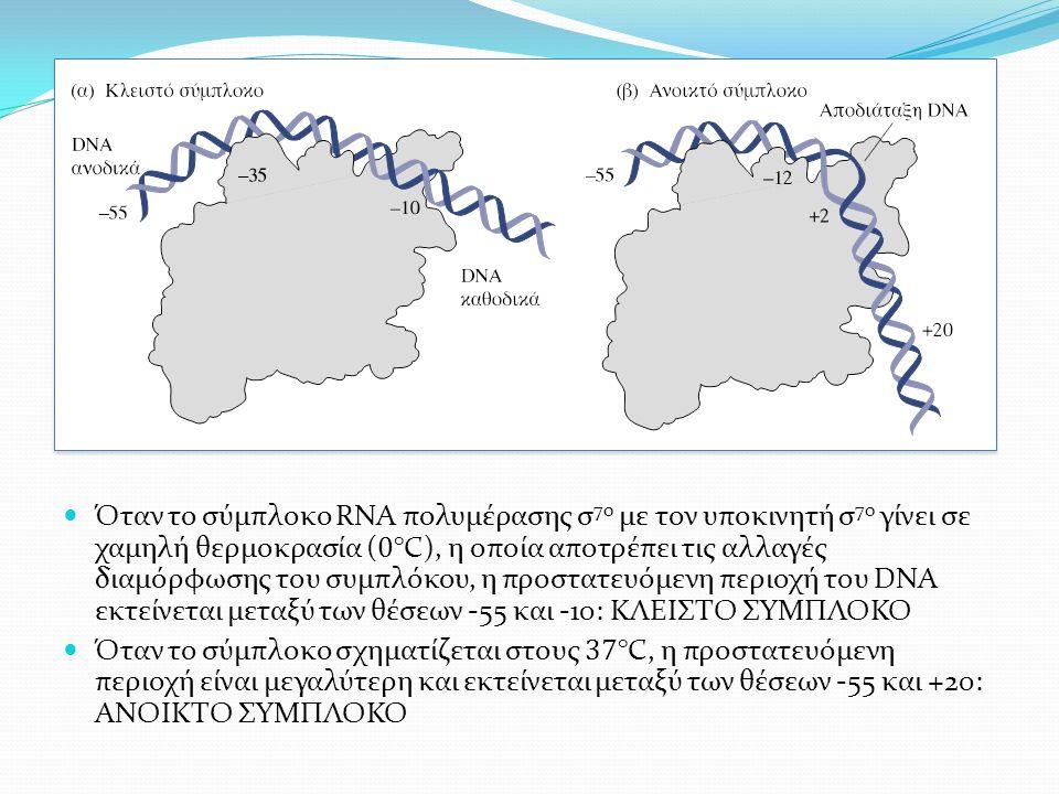Όταν το σύμπλοκο RNA πολυμέρασης σ 70 με τον υποκινητή σ 70 γίνει σε χαμηλή θερμοκρασία ( 0 °C), η οποία αποτρέπει τις αλλαγές διαμόρφωσης του συμπλόκου, η προστατευόμενη περιοχή του DNA εκτείνεται μεταξύ των θέσεων -55 και -10: ΚΛΕΙΣΤΟ ΣΥΜΠΛΟΚΟ Όταν το σύμπλοκο σχηματίζεται στους 37 °C, η προστατευόμενη περιοχή είναι μεγαλύτερη και εκτείνεται μεταξύ των θέσεων -55 και +20: ΑΝΟΙΚΤΟ ΣΥΜΠΛΟΚΟ