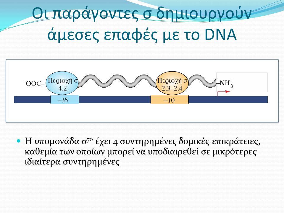 Οι παράγοντες σ δημιουργούν άμεσες επαφές με το DNA Η υπομονάδα σ 70 έχει 4 συντηρημένες δομικές επικράτειες, καθεμία των οποίων μπορεί να υποδιαιρεθεί σε μικρότερες ιδιαίτερα συντηρημένες