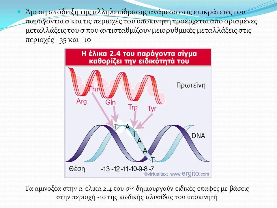 Άμεση απόδειξη της αλληλεπίδρασης ανάμεσα στις επικράτειες του παράγονται σ και τις περιοχές του υποκινητή προέρχεται από ορισμένες μεταλλάξεις του σ που αντισταθμίζουν μειορυθμικές μεταλλάξεις στις περιοχές –35 και –10 Τα αμινοξέα στην α-έλικα 2.4 του σ 70 δημιουργούν ειδικές επαφές με βάσεις στην περιοχή -10 της κωδικής αλυσίδας του υποκινητή