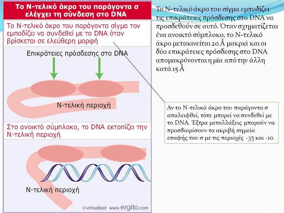 Το Ν-τελικό άκρο του σίγμα εμποδίζει τις επικράτειες πρόσδεσης στο DNA να προσδεθούν σε αυτό.