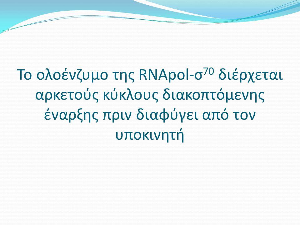 Το ολοένζυμο της RNApol-σ 70 διέρχεται αρκετούς κύκλους διακοπτόμενης έναρξης πριν διαφύγει από τον υποκινητή