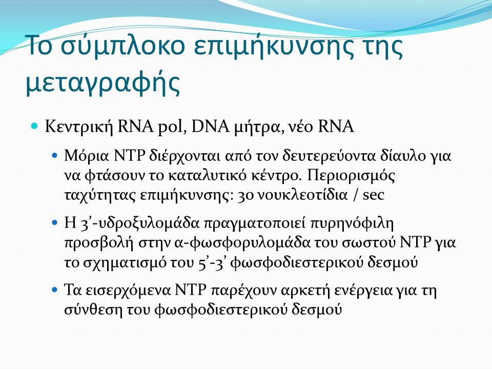 Το σύμπλοκο επιμήκυνσης της μεταγραφής Κεντρική RNA pol, DNA μήτρα, νέο RNA Μόρια ΝΤΡ διέρχονται από τον δευτερεύοντα δίαυλο για να φτάσουν το καταλυτικό κέντρο.