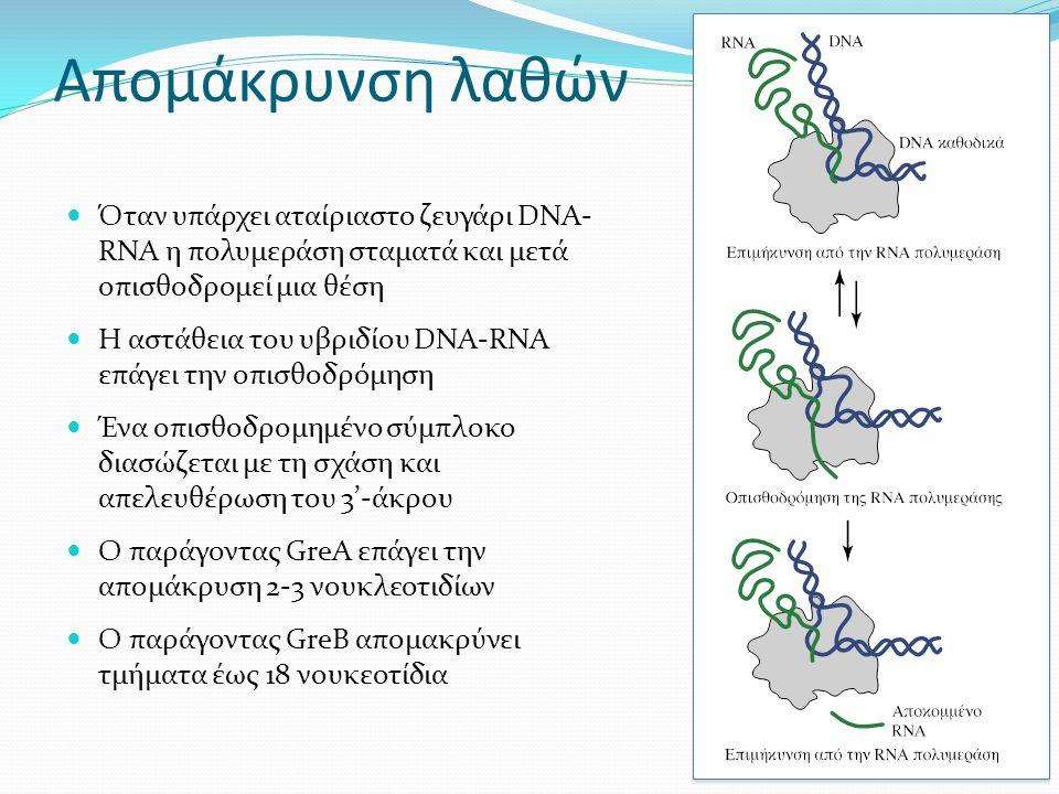 Απομάκρυνση λαθών Όταν υπάρχει αταίριαστο ζευγάρι DNA- RNA η πολυμεράση σταματά και μετά οπισθοδρομεί μια θέση Η αστάθεια του υβριδίου DNA-RNA επάγει την οπισθοδρόμηση Ένα οπισθοδρομημένο σύμπλοκο διασώζεται με τη σχάση και απελευθέρωση του 3'-άκρου Ο παράγοντας GreA επάγει την απομάκρυση 2-3 νουκλεοτιδίων Ο παράγοντας GreB απομακρύνει τμήματα έως 18 νουκεοτίδια