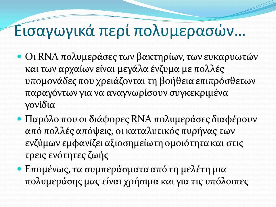 Εισαγωγικά περί πολυμερασών… Οι RNA πολυμεράσες των βακτηρίων, των ευκαρυωτών και των αρχαίων είναι μεγάλα ένζυμα με πολλές υπομονάδες που χρειάζονται τη βοήθεια επιπρόσθετων παραγόντων για να αναγνωρίσουν συγκεκριμένα γονίδια Παρόλο που οι διάφορες RNA πολυμεράσες διαφέρουν από πολλές απόψεις, οι καταλυτικός πυρήνας των ενζύμων εμφανίζει αξιοσημείωτη ομοιότητα και στις τρεις ενότητες ζωής Επομένως, τα συμπεράσματα από τη μελέτη μια πολυμεράσης μας είναι χρήσιμα και για τις υπόλοιπες