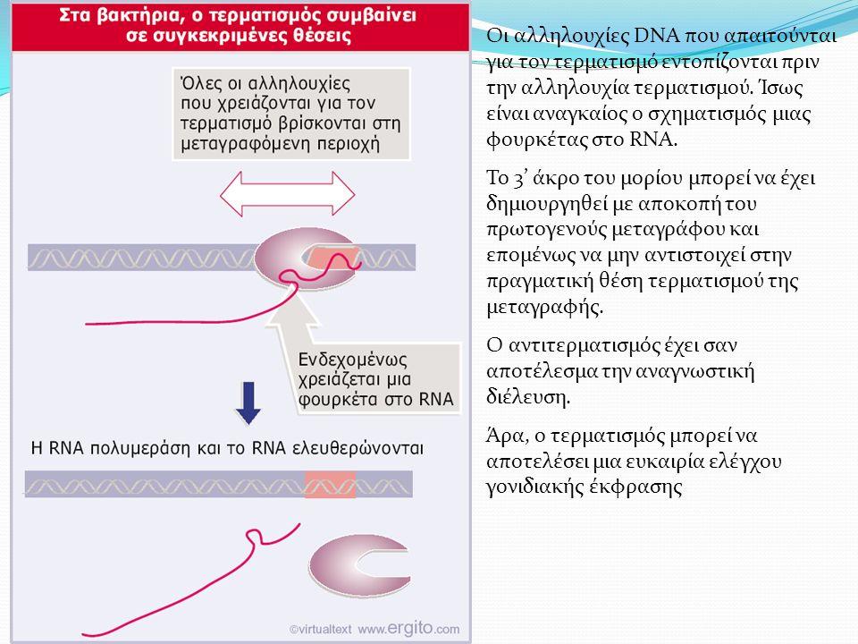 Οι αλληλουχίες DNA που απαιτούνται για τον τερματισμό εντοπίζονται πριν την αλληλουχία τερματισμού.
