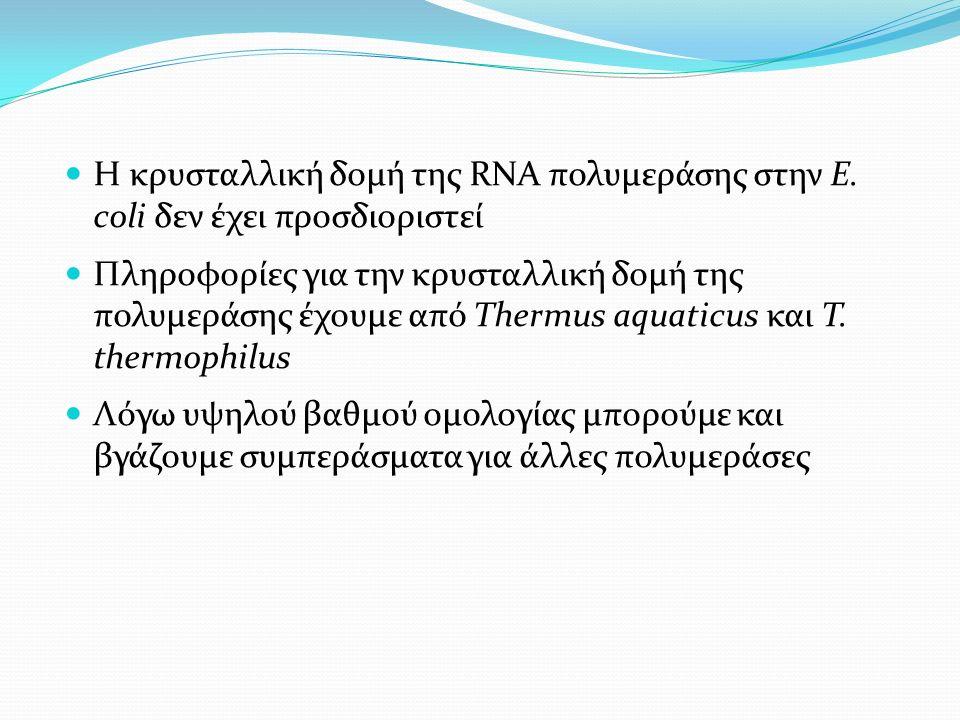 Η κρυσταλλική δομή της RNA πολυμεράσης στην E.