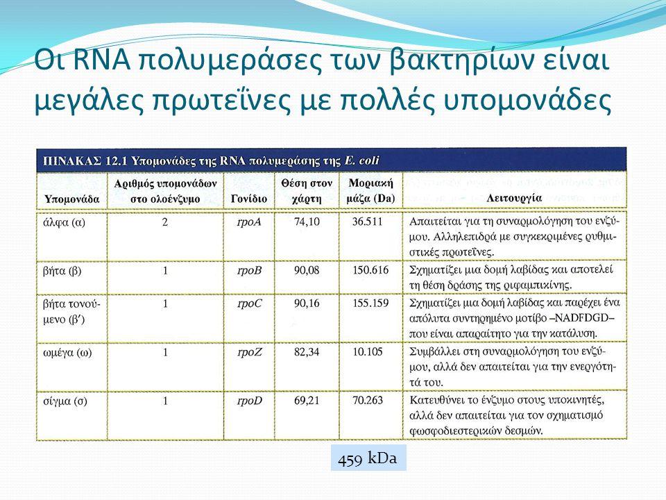 Οι RNA πολυμεράσες των βακτηρίων είναι μεγάλες πρωτεΐνες με πολλές υπομονάδες 459 kDa