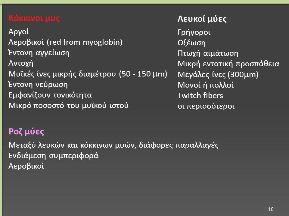 Κόκκινοι μυς Αργοί Αεροβικοί (red from myoglobin) Έντονη αγγείωση Αντοχή Μυϊκές ίνες μικρής διαμέτρου (50 - 150  m) Έντονη νεύρωση Εμφανίζουν τονικότητα Μικρό ποσοστό του μυϊκού ιστού Ροζ μύες Μεταξύ λευκών και κόκκινων μυών, διάφορες παραλλαγές Ενδιάμεση συμπεριφορά Αεροβικοί Λευκοί μύες Γρήγοροι Οξέωση Πτωχή αιμάτωση Μικρή εντατική προσπάθεια Μεγάλες ίνες (300  m) Μονοί ή πολλοί Twitch fibers οι περισσότεροι 10