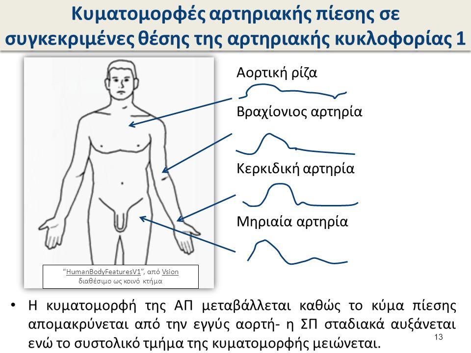 Κυματομορφές αρτηριακής πίεσης σε συγκεκριμένες θέσης της αρτηριακής κυκλοφορίας 1 Η κυματομορφή της ΑΠ μεταβάλλεται καθώς το κύμα πίεσης απομακρύνεται από την εγγύς αορτή- η ΣΠ σταδιακά αυξάνεται ενώ το συστολικό τμήμα της κυματομορφής μειώνεται.